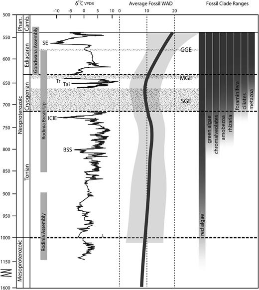 Overview of major events and fossil diversity in the Proterozoic. Carbon isotope                  data compiled from Macdonald et al. (2009, 2010), Halverson et al. (2010), and Cox et al. (unpublished).                  SE=Shuram carbon isotope excursion, Tr=Trezona carbon isotope excursion,                  Tai=Taishir carbon isotope excursion, ICIE=Islay carbon isotope excursion,                  BSS=Bitter Springs stage, SGE=Sturitian aged glacial event, MGE=Marinoan aged                  glacial event, GGE=Gaskiers aged glacial event. Trend line and confidence interval                  for within assemblage fossil diversity from Figure                    5. Eukaryotic clade ranges from this analysis.