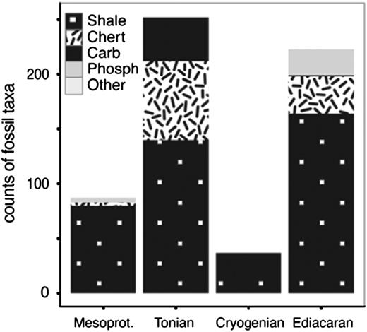 Counts of fossil taxa described in each major lithology per Period.                  Carb=carbonate, Phosph=phosphorite.