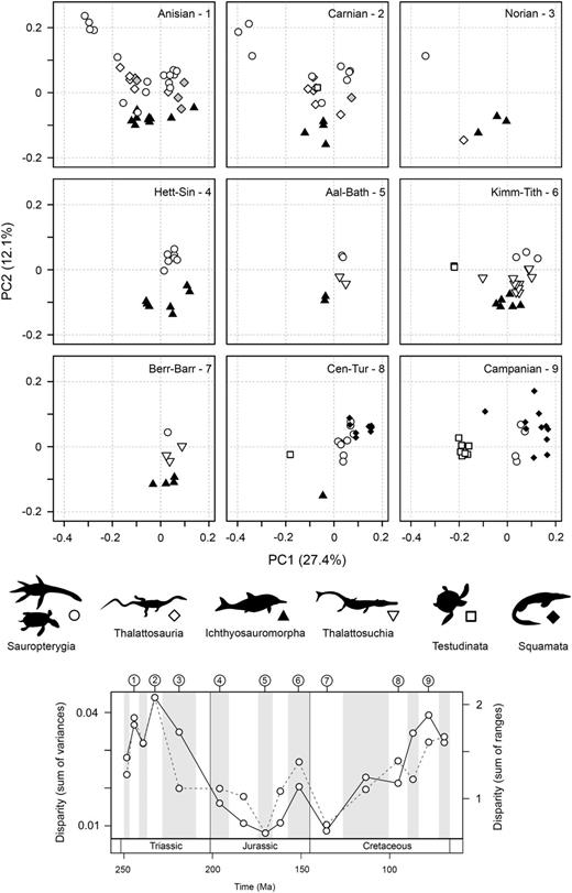 Patterns of functional morphospace occupation for marine reptiles through the                  Mesozoic. Two-dimensional plots of PCOa axes 1 and 2 are illustrated for nine                  sampled intervals: Anisian, Carnian, Norian, Hettangian–Sinemurian,                  Aalenian–Bathonian, Kimmeridgian–Tithonian, Berriasian–Barremian,                  Cenomanian–Turonian, and Campanian. Symbols are used to represent the major                  groups. The temporal position of each sampled interval is illustrated in a                  disparity through time plot based on the sum of variances and sum of ranges                  (dotted line) metrics. All 16 intervals are figured in Supplementary Figure 7.