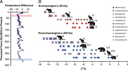 Geochemical data from the Vostok ice core (A) and the Cuddie Springs fauna (B).                Vostok ice core data (Petit et al. 2001)                with temperature differences based on δ18O values noted through time (A);                blue and red highlighted areas correspond to prearchaeological and archaeological                horizons at Cuddie Springs (Trueman et al. 2005; Fillios et al. 2010; Grün et                al. 2010). Tooth enamel stable carbon                isotope values for the Cuddie Springs fauna through time (B), prearchaeological                (SU9, ESR dates, Grün et al. 2010; blue)                and archaeological (SU6, calibrated radiocarbon dates, Fillios et al. 2010; red), carbon isotope values for                individuals from corresponding temporal horizons are noted with distinct letters,                indicating statistically different groups (i.e., taxa denoted with a b are not distinct from one another but are distinct from taxa with a, c, d, and e notation; Fisher's LSD, p<0.05). P, prearchaeological; A,                archaeological.