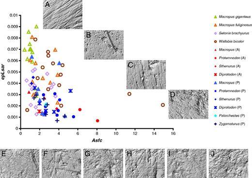 DMTA values and photosimulations for extant (A–D) and extinct taxa (E–J) from                Cuddie Springs. A scatter plot of dental microwear texture attributes of complexity                  (Asfc) and anisotropy (epLsar) of extant and                extinct taxa. Extant taxa (open symbols, A–D); extinct taxa (solid symbols, E–J; P,                prearchaeological; A, archaeological). Photosimulations of the following extant                museum specimens are included: Macropus giganteus (A, MV-C24527), Macropus fuliginosus (B, WAM-M12229), Setonix                brachyurus (C, WAM-M3543), and Wallabia bicolor (D,                AM-M36793). Cuddie Springs photosimulations of prearchaeological (SU9) specimens                include: Macropus (E, CS-1059), Protemnodon (F,                CS-1069), Sthenurus (G, CS-1071), Palorchestes (H,                CS-1049), Diprotodon (I, CS-1034), and Zygomaturus (J, CS-1044).
