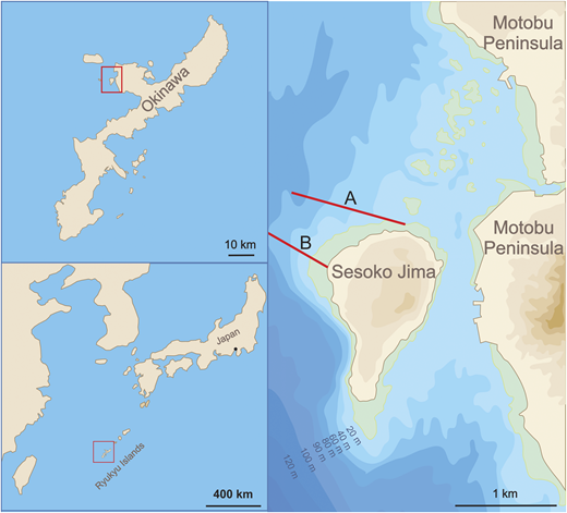 Illustration of the sampling area, Sesoko-Jima, Okinawa, Japan. The Northern and Southern transects as described by Hohenegger et al. (1999) are indicated as A and B, respectively.