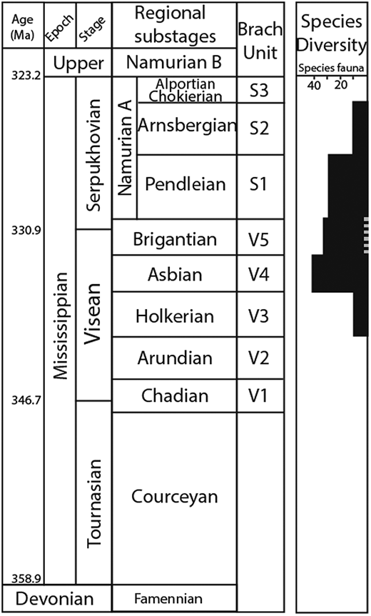 Chronostratigraphy of the British Mississippian (revised and edited from Cohen et al. 2013) with associated brachiopod units and Gigantoproductus species diversity (edited from Qiao & Shen 2015, fig. 5). Stratigraphic location of the study sites is shown by the dashed grey line within the species diversity column on the right. Both localities fall within the Brigantian, but Ricklow Quarry is stratigraphically lower than Once-a-Week Quarry.