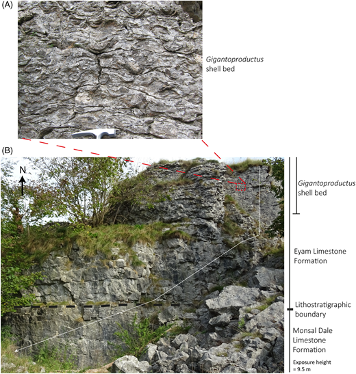Photographs of the exposure at Ricklow Quarry. (A) A detail of a vertical section through the Gigantoproductus shell bed with rock hammer for scale. (B) The disused quarry face. The boundary between the Monsal Dale Limestone and the Eyam Limestone formations, and the Gigantoproductus shell bed is highlighted. The logged section (Fig. 5) is represented by the white line, but the most westerly sampling site is not shown.