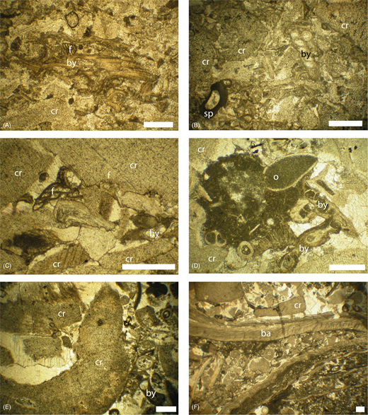 Thin section micrographs of the Once-a-Week Quarry section. All scale bars are 0.5mm. (A) Skeletal packstone – wackestone with intraclasts from the central part of the section showing packing and dominant bryozoans (by) and crinoids (cr) with Tetrataxis foraminifer (f) (sample 7 at c. 6.25m). (B) Skeletal packstone–wackestone with intraclasts from the top of the section showing strong compaction of brachiopod spines (sp), bryozoan and crinoid fragments (sample 11i at c. 9.75m). (C) Crinoidal packstone–grainstone with fenestellid bryozoan, crinoids and foraminifera (sample 4 taken c. 4.1m from the base of the section). (D) A micrite-rich intraclast within the crinoidal packstone–grainstone containing ostracods (o) and fenestellid bryozoan (by), and surrounded by crinoid ossicles that have undergone compaction (sample 2 at c. 1.6m). (E) The skeletal intraclastic grainstone dominated by crinoid, and other skeletal debris (sample 5 at c. 4.75m). (F) Gigantoproductus packstone–wackestone, showing heterogeneity at thin section scale (sample 8 at c. 6.4m). Sample numbers are assigned to hand specimen samples and corresponding thin sections are currently archived at the University of Leicester.
