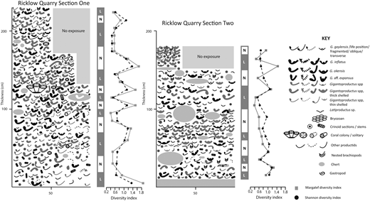 Schematic representation of Sections One and Two of the shell beds at Ricklow Quarry. The base of these sections represents the base of the Gigantoproductus shell bed. Each shell represents an identified individual and is drawn in the observed orientation. Crinoids are represented as abundance and whether ossicles or stems are present. Individuals are drawn to scale where measurements are known. Classification as life (L) or neighbourhood (N) assemblages is illustrated, and Shannon and Margalef diversity indices shown.
