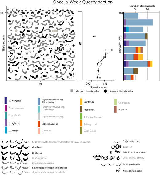 Schematic representation of the Gigantoproductus shell bed alongside diversity indices and the vertical variations in numbers of individuals at Once-a-Week Quarry. Note that only neighbourhood (N) assemblages are present. Grey words in the key indicate fauna that were not observed at Once-a-Week Quarry to aid comparison with the fauna found at Ricklow Quarry (Figs 9 and 10).
