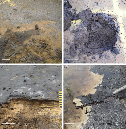 Tar crusts formed after extensive weathering of crude oil (a–c) or the undistillable waste products after artisanal refinement (d). Scale bar = 0.1m.