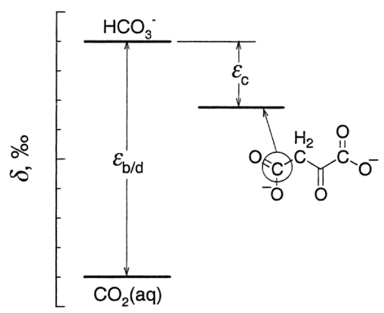 Fractionation Of Carbon And Hydrogen Isotopes In Biosynthetic Schematic Process Dating Tree Rings Using The C14 System View Largedownload Slide