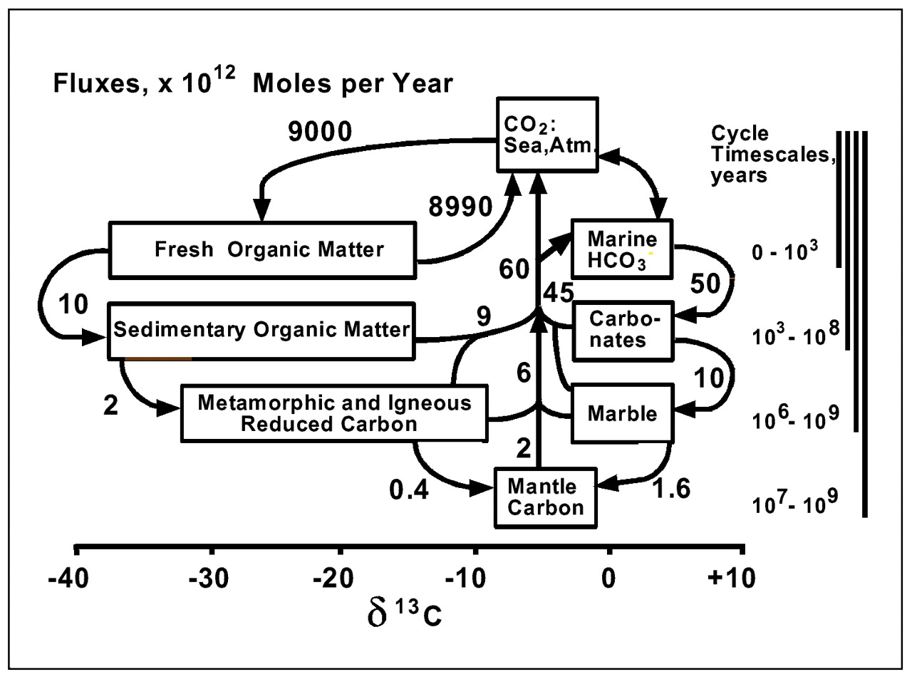 Isotopic Evolution Of The Biogeochemical Carbon Cycle During Animal Cells Moreover On Plant And Cell Diagram View Largedownload Slide