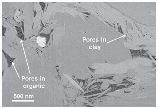 A FIB/SEM slice of the Utica shale revealing the nature of nanopores hosted primarily in the organic-dominated regions associated with clays, in this case, illite. The bright grain in the upper left is pyrite.