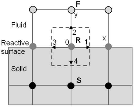 A schematic illustration of a fluid–solid interface node in the D2Q5 lattice model. F and S represent a fluid and solid node, respectively. R represents the reactive interface node.