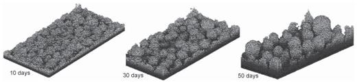 Developing biofilm using the CA modeling approach on a flat surface due to diffusion of a single limiting substrate from the top boundary. The system is transport limited [Used by permission of John Wiley and Sons, from Picioreanu C, van Loosdrecht MCM, Heijnen JJ (1998) Mathematical modeling of biofilm structure with a hybrid differential-discrete cellular automaton approach. Biotechnology and Bioengineering, Vol. 58, Fig. 6, p. 111].