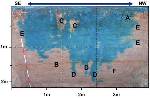 The main vertical excavation. The profile is approximately 2.2 m deep and 4 m wide. The blue arrow indicates the extent of infiltration at surface. Also indicated are active roots and bioturbation (A), redoximorphic horizon (B), bypassed areas (C), infiltration fingers (D), lateral flow (E), and isolated dyed areas (F).
