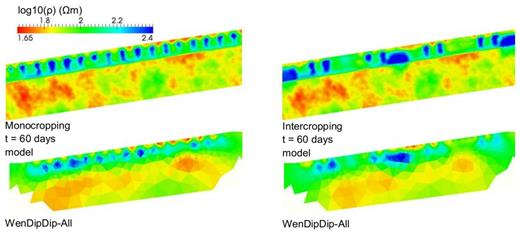 Modeled and inverted resistivity (ρ in Ωm, logarithmic scale) at t = 60 d for monocropping and intercropping (pedo-physical function f4).