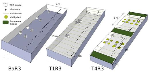 Overview of cropping patterns Ba, T1 and T4 in replication block 3: time domain reflectometer (TDR) probe location (white: z = 0–0.25 m, gray = 0.20–0.45 m), electrode locations, topography, crops and planting distances. The maize rows contained 16 plants. T6 is similar to T4, but without TDR probes and with the electrodes at the left side of the plot.