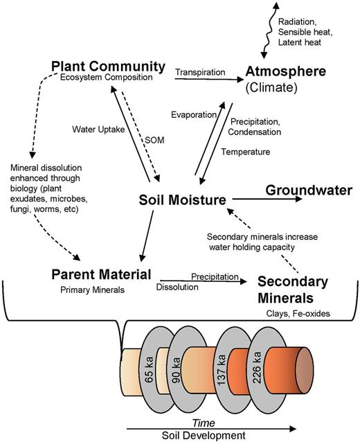 Complex biogeochemical interactions of pedogenesis that lead to the development of structured heterogeneity. The state factors of Jenny (1941) (climate, biota, relief, parent material, and time) are all here except landscape position, which is held constant on the flat-lying terraces. Soil moisture is the key state variable that directly and indirectly regulates weathering and mottle formation. The interconnected pedogenic processes are constantly interacting through time. Mass fluxes are solid straight arrows, energy fluxes are solid wavy arrows and feedback processes are dashed arrows; SOM is soil organic matter.