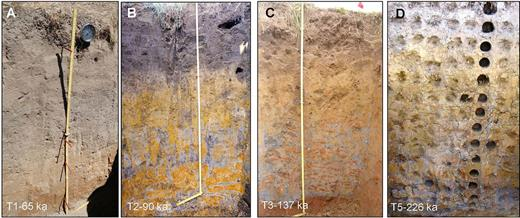 Photographs of soil pits. Each image extends from the ground surface to the 1.5-m depth. Note: the bulk density samples (holes in D) are on a 0.1-m spacing.