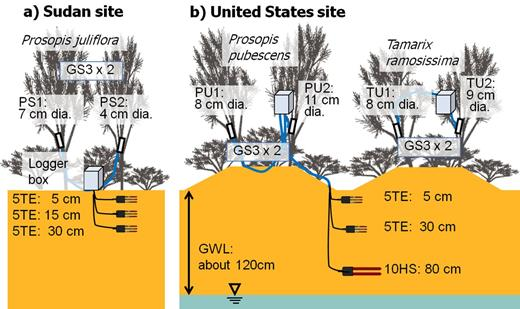 Setup of the dielectric moisture sensors: (a) the Sudan site with two Prosopis juliflora trees (PS1 and PS2) outfitted with GS3 capacitance probes and underlain by ECH2O 5TE soil moisture probes at three depths, and (b) the US site with two Prosopis pubescens trees (PU1 and PU2) and two Tamarix ramosissima trees (TU1 and TU2) each outfitted with a GS3 probe and underlain by two 5TE and one 10HS ECH2O soil moisture probes. The average groundwater level (GWL) at this site was about 1.23 m.