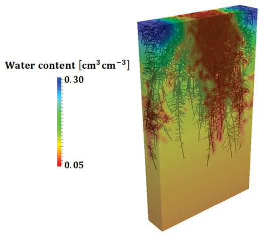 Relative water saturation in soil around a root system taking up water simulated with R-SWMS.