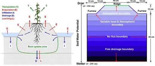Schematic of the transport domain showing the main hydrological fluxes (left) and initial and boundary conditions (right) of a furrow irrigation system (modified from Šimůnek et al., 2016).