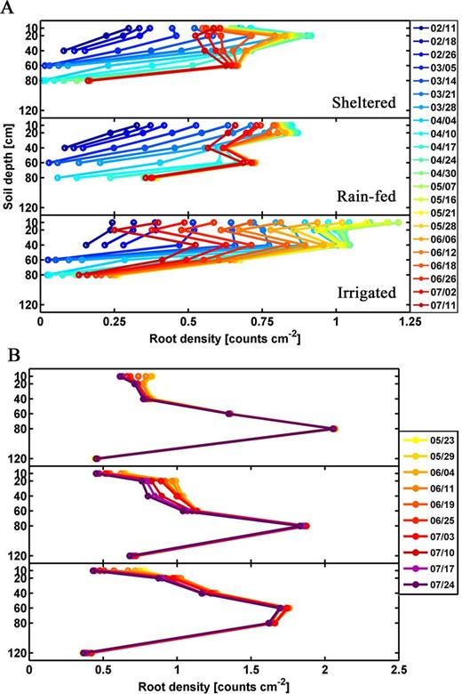 Time series distributions of root density at six observed soil depths in the sheltered, rainfed, and irrigated plots of the (A) upper and (B) lower facilities.