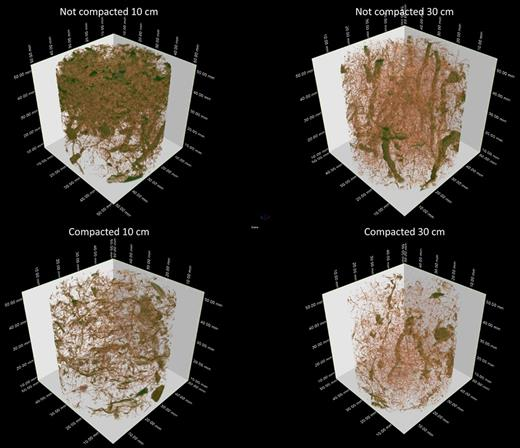 Representative examples (100-cm3 samples) of soil pore structure detectable on micro computed tomography images (voxel size 60 μm, corresponding to a minimum pore width of 120 μm) for uncompacted (top) and compacted bare soil (bottom) at the 0.1- (left) and 0.3-m depth (right), sampled 2 wk after the compaction event.