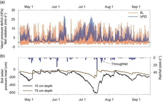 Seasonal variations of (a) selected meteorological variables affecting plant transpiration—hourly averages of vapor pressure deficit and net radiation (the latter expressed in units of equivalent evaporation, i.e., energy divided by the density of water and the latent heat of vaporization) and (b) variables defining the soil moisture conditions—daily precipitation totals and soil water pressure head variations observed at two depths.