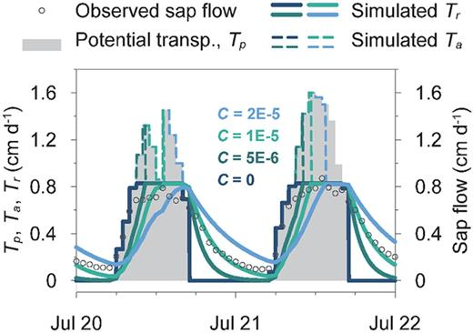 The sensitivity of the transpiration stream model to the value of whole-plant hydraulic capacitance, C, reflected in the different predictions of whole-plant root water uptake, Tr, and the actual transpiration rate, Ta.