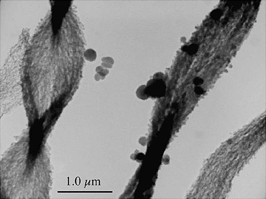 Mineralogy of key environmental systems environmental mineralogy tem image showing iron oxyhydroxide particles coating stalk products of bacteria belonging to the gallionella genera fandeluxe Gallery