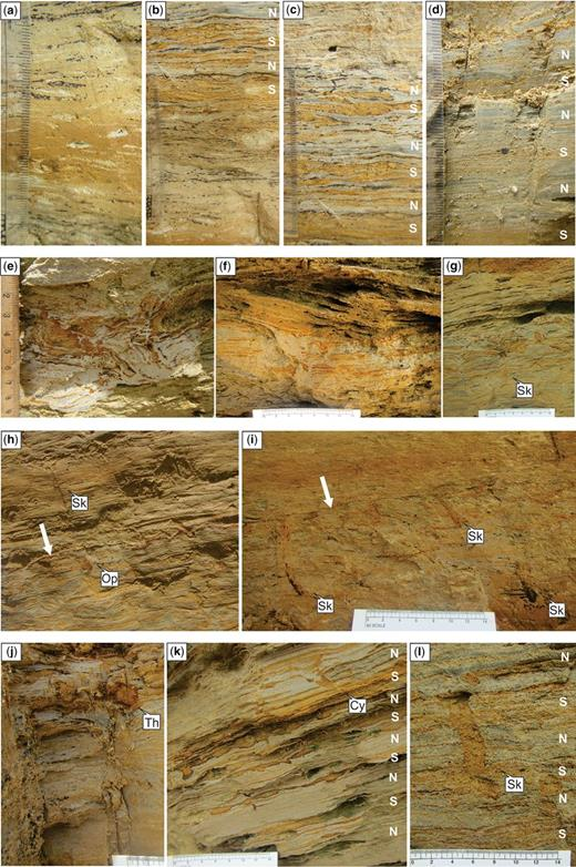 Photographs of sedimentary features observed in subsections GB1 and GB2. (a) Lenticular bedding in an orange silty sand (OSS) layer, with organic fragments scattered in sand lenses above and below the OSS. (b) Wavy, parallel bedding with interlaminated silt–clay and sand–clay couplets. Thin discontinuous layers of organic material occur at the base of some clay laminae. Clay laminae increase in thickness up-section from spring to neap deposits. (c) Alternating sand-rich spring and clay-rich neap deposits, with organic material isolated to neap deposits. (d) Single organic fragment in mud-rich layer within interlaminated silt–clay couplets. (e) Scour cut into deformed layer and filled with inclined sand–clay couplets. Scour fill includes an OSS layer. (f) Contorted layer deforms mud-rich couplets and an OSS layer above it. (g) Skolithos with rhythmic sediment infill. Bioturbated layer between successive OSS layers. Bioturbation index (BI) 2. (h) Bioturbated layer beneath a thin concretion layer (shown by white arrow). Rare Skolithos and Ophiomorpha occur with unidentified burrows; BI 2. (i) Skolithos with organic material. Thin concretion layer (shown by white arrow) above bioturbated layer with BI 1. (j) Thalassinoides in mud-rich layer of mud–silt couplets. (k) Cylindrichnus. Lenticular beds separate mud-rich couplets. (l) Skolithos in alternating neap–spring cycles of couplets. Photographs (a–i) from GB1; (j–l) from GB2. Lithology from photographs: light brown or orange colour indicates sand or silty sand, grey colour indicates clay and black colour indicates organic material. Neap (mud-rich) and spring (sand-rich) deposits are interpreted on the photographs as N and S, respectively.