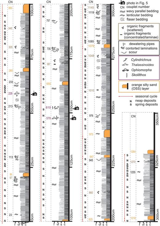 Sedimentary log of subsection GB2 with interpreted cycles. Couplet numbers corresponding to sedimentary features of interest are listed in the column CN. Locations of photographs through the section are also shown.