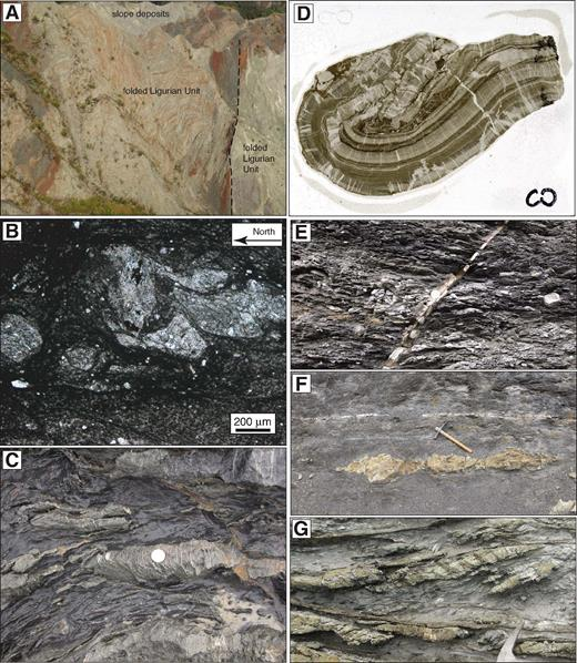 (A) Prelithification folding in clay-rich sequence of the Ligurian units (Northern Apennines, Italy) interpreted as due to frontal offscraping, cut by coeval sharp shear surfaces (dashed black lines; see detailed description in Bettelli and Vannucchi, 2003). (B) Photomicrograph of fold in soft sediments from the Chrystalls Beach complex, New Zealand, where bulk shear is top-to-the-north; note mixing along diffuse lithological boundaries and largely intact grains. (C) Example of dismembered and boudinaged sand layer in shaly matrix, Chrystalls Beach complex, New Zealand; note extension veins exclusively cut the sandstone interlayers. (D) Thin section of a synlithification fold in interlayered shale and siltstone. Pre- and synfolding calcite extension veins preferentially affect the siltstone interlayers. Ligurian unit in the Sestola Vidiciatico tectonic unit, Northern Apennines, Italy (details in Remitti et al., 2007), height = 45 mm. (E, F) Calcite shear veins in the Sestola-Vidiciatico tectonic unit (Northern Apennines, Italy) crosscutting foliation (E) and parallel to a preexisting foliation and lithological layering affected by soft-sediment boudinage (F). (G) Foliation and lithological layering-parallel quartz-coated fault, New Zealand (details in Fagereng et al., 2010).