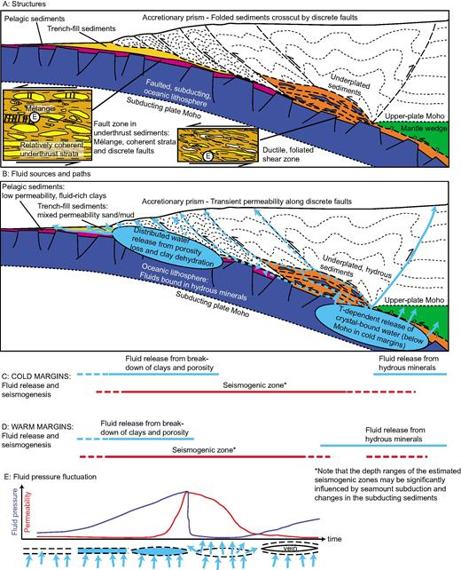 Schematic cartoons of structures and fluids along the subduction megathrust, inspired by the Chilean (Melnick et al., 2006) and southern Hikurangi (Henrys et al., 2013) margins: (A) Summary of structures, showing pelagic sediments (purple) being downthrust beneath trench fill (yellow) as a separate, relatively undeformed unit that can carry fluids to depths where sediments are finally underplated and mixed (orange). Continued underplating of sediments builds an accretionary prism (white) with discrete faults. Through depths where deformation is dominantly brittle, a mélange develops (left insert; after Rowe et al., 2013) along the subduction interface, crosscut by faults and tensile veins; beyond the brittle-ductile transition, a ductile, foliated shear zone develops, containing foliation-parallel veins (right insert). (B) Fluids are released in two prime locations, from porosity loss and clay dehydration at shallow depths, and crystal-bound waters in hydrous minerals at depths near the Moho. The permeability structure determines where these fluids can go; shallow fluids escape fairly easily along hanging-wall faults and through the subducted sediments (solid blue arrows), but may also be carried downward below an impermeable fault, or escape along deeper faults (dashed blue arrows). Deeper fluids are released into impermeable sediments, and their escape is likely related to generation of foliation-parallel veins and secondary porosity resulting from fluid pressure fluctuations and intermittent fracture (see panel E). As the fluids move, they are transferred to the mantle wedge and along faults into the overlying prism (solid blue arrows), but they may also travel updip along the megathrust and subsidiary faults in the underthrust sediment pile (dashed blue arrows). (C) Estimated depth extent of seismogenic zone (dashed line for potential extension by transient embrittlement). In cold margins, the seismogenic zone may extend past the Moho, and its downdip end likely