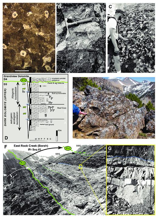 "—A) Floating rounded quartz (Q) in coarse, recrystallized (peloidal, intraclastic) dolograinstone in basal Grandview Dolomite at Grandview Hill above SB lFr0 (see D). B) Subtidal biostromal stromatoporoid floatstone–rudstone with Euryamphipora in the Dark Dolomite (D3) at Horseshoe Gulch in the Lemhi Range (hammer 30 cm). C) Round to bulbous stromatoporoid bafflestone buildup at Rock Creek (Borah Peak area), correlative to the Grandview Reef. D) Summary of Grandview Hill reef stages (""Leduc equivalent"") in the top of D3 Dark Dolomite Member under SB lFr0 (after Isaacson et al. 1988), with ""Polygnathid–Icriodus"" biofacies (lower ""rhenana"" Zone Sandberg, personal communication, in Wiler 1992). E) Silicified, thromboidal stromatoporoid bafflestone bed in the basal D5 Jefferson member at Gooseberry Creek (part of ""Nisku Reef"" complex) in late Frasnian sequence No. 3. (Finger = 10 cm). F) D3 member overlain by lighter colored, shallow-water peritidal lithologies in the bottom of the D4 member near Borah Peak. Basal late Frasnian sequence boundary (lFr0) represents drop in base level/accommodation with local subaerial exposure. Two dark, subtidal transgressive marine bands overlie peritidal units in the D4 member and comprise the first Late ""rhenana"" sequence, which can be regionally mapped (lFr Sequence No. 1). G) Blow-up of sharp contact in which peritidal, dolomitic HST is overlain by subtidal dark limestone, with TST shown in F (ski pole = 1 m)."