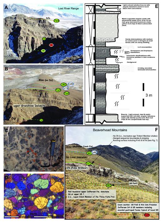 "—A) Grandview Canyon upper Jefferson Formation Grandview Dolomite (Dg) under SB Fm4 overlain by False Birdbear limestone (Dfb). About 150 m of upper Grandview Dolomite on the north side of the canyon, of a total of 357 m measured by plane-table (Ross 1934). B) As above, showing surfaces associated with overlying Three Forks Trident Member (Dt) and Mississippian McGowan Creek Fm (Mmc) (Black Angus cows for scale). C) Nodular crinoidal packstone of the False Birdbear; forms resistant bench in the Lost River Range (hammer 30 cm). D) Thin section of medium, moderately sorted, rounded, quartz arenite beach sands with calcite matrix from above SB Fm1 at Cedar Run (Lemhi Range). (Cross nichols with gypsum wedge). E) Meter-scale upper Jefferson shallowing-upward successions in D4 member near Uncle Ike Creek, Lemhi Arch flank. These D4 cycles resemble the dark and light, stromatolitic, laminated to bioturbated and sandy D5 to D6 cycles shown in the upper Grandview Dolomite in A and B, but with more stratiform evaporite solution breccia and shelly fauna present. F) ""Jefferson False Birdbear"" ""marginifera-"" and cephalopod-bearing lime packstone bench at Long Canyon overlain by ""expansa"" Zone Sappington Formation (cf. Poole and Sandberg 1977). Audrey Warren and Luke Schwab for scale."