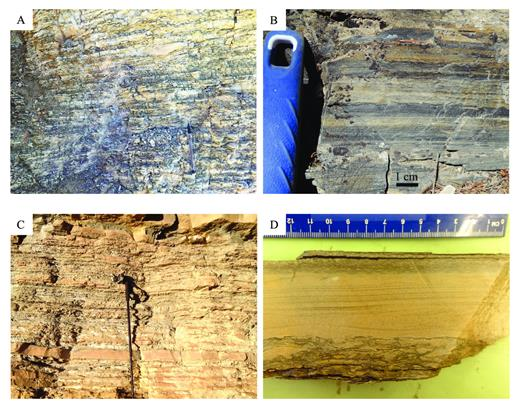 —Unit 4 lithofacies. A) 4A (outcrop), bioturbated silty shale with starved ripples; B) 4A (outcrop), magnified photo of 4A showing bioturbation and laminae; C) 4B (outcrop), bioturbated shaley siltstone with storm beds; D) 4B (cut hand sample), magnified photo of 4B showing hummocky cross stratification in a storm bed and bioturbation in the background lithology.