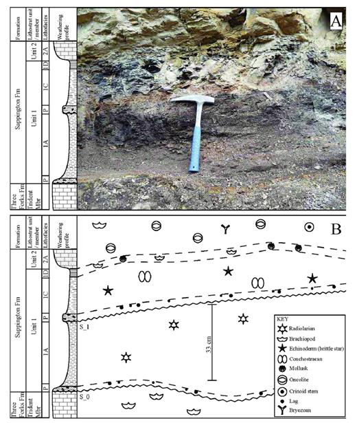 —A) outcrop photo of the surfaces (S_0 and S_1) that bound sequence 1; B) annotation of the outcrop photo from A showing observed fauna, sedimentary structures, lithostratigraphy, and key surfaces. P = paleosol.