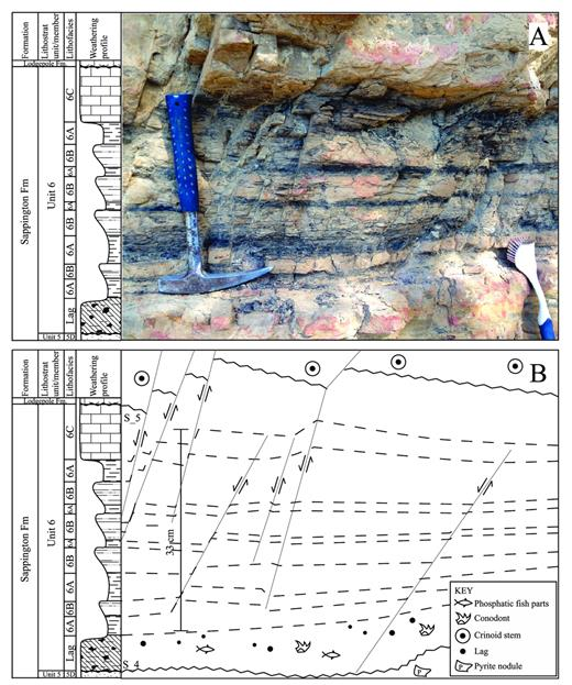 —A) outcrop photo of the surfaces (S_4 and S_5) that bound sequence 3; B) Annotation of the photo from A showing observed fauna, weathering profile, lithostratigraphy, and significant surfaces.
