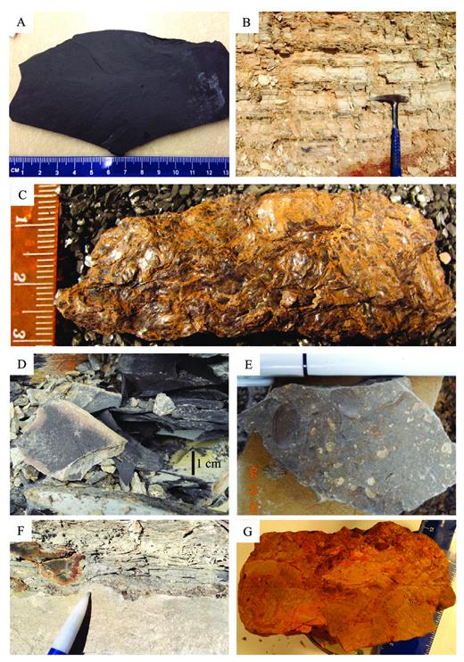 —Unit 1 lithofacies. A) 1A (hand sample), black shale with marine fauna; B) 1A (outcrop), black shale and chert beds; C) 1A (hand sample), common appearance of 1A in high deformation areas (lithofacies 1B of Gutschick et al. (1962); D) 1C (outcrop), black shale with brackish fauna; E) 1D (hand sample), fossiliferous gray shale; F) outcrop photo of lag with phosphatic fish fragments and conodonts; G) diagenetic rock located beneath S_0.