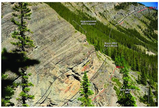 —Hemispherical stromatoporoid boundstone patch reefs rooted on the WD2.2 surface. Overlying and underlying strata are composed of platform-interior meter-scale cycles. Patch reef inception is associated with backstepped platform margins and increased circulation to the platform-interior, resulting from a rapid rise in relative sea level. Grassi Lakes (see Fig. 4 for location). A similar patch reef development overlying the WD2.2 HF sequence boundary is observed at Cripple Creek (Wong et al. 2016).