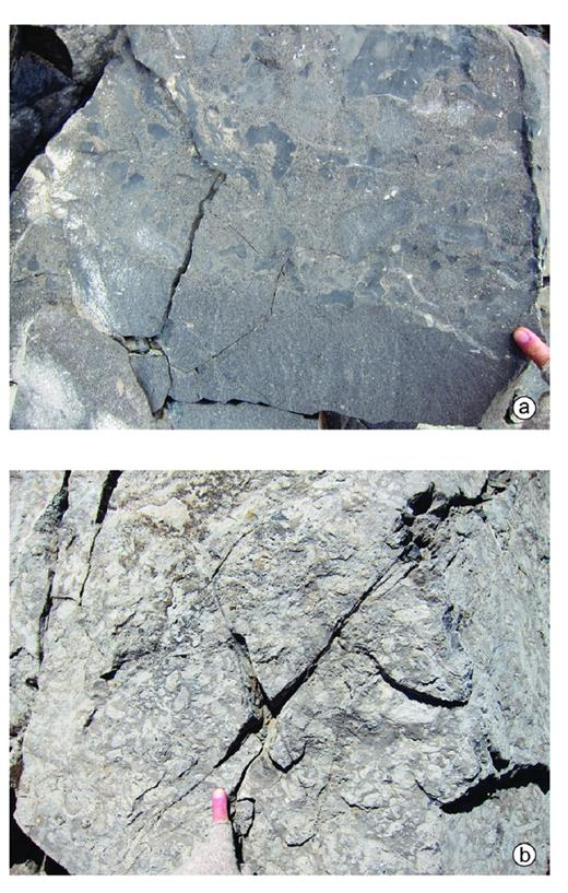 "—a) Photo showing interbeds (25 cm thick) of mainly sand-sized, peloidal-rounded intraclast grainstone overlain by large intraclastic (up to 10 cm wide) packstone with a matrix similar to the underlying bed. The large intraclasts are composed of early cemented, either dark gray wackestone–mudstone or medium gray peloidal-rounded intraclast grainstone. The two interbedded lithologies form a basin floor/toe of slope unit, 4-m-thick unit, 30 m above the base of Mt. Berry section (extreme left, Fig. 13a). These grainstone–packstone debris sheets were derived from differentially cemented upslope grainy margins, with lower foreslope wackestone–mudstone lithologies incorporated during sediment gravity flows. b) A large intraclast packstone. Hopkins (1977) referred to a similar lithology as ""breccia beds."""