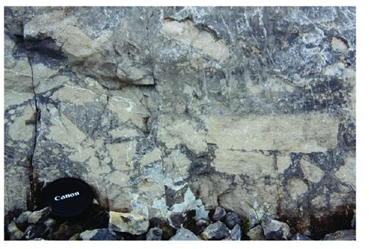 "—Intraclastic breccia with ""rip-up"" clasts of fenestral mudstone suspended in subtidal, crinoid wackestone, Wabamun 1 composite sequence, Cardinal Waterfall section (photo by D. Mans)."