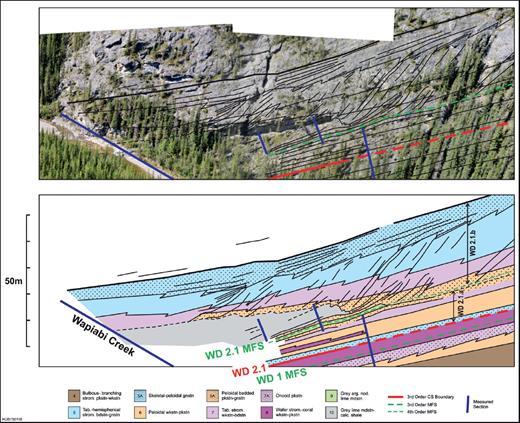 —The WD2.1 HFS lowstand consists of prograding hemispherical stromatoporoid boundstone overlying tabular stromatoporoid packstone–boundstone at Wapiabi Creek. Carbonate sand (lithofacies 6A) overlies the erosive contact (wavy black dashed/solid line) developed on organic-rich calcareous shale (lithofacies 10). Note the steep foreslope dips of 25–30°. North side of Wapiabi Creek, box 2 in Figure 9.