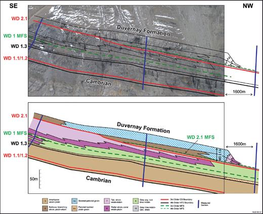 —The WD2 composite sequence LST at Kiska Creek, consisting of two aggradational cycle sets. Each cycle set is composed of peloidal and Amphipora packstone (platform-interior strata) with coeval grainstone margins. The lowstand is in sharp contact with and onlaps the antecedent WD1 CS comprised of dipping (5–15°) middle foreslope deposits.