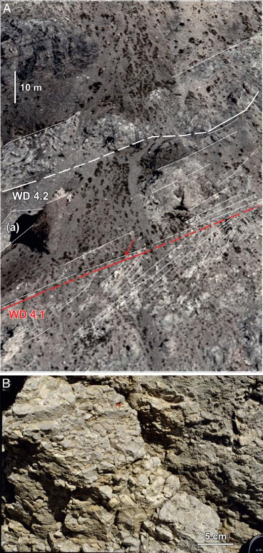 —A) Foreset truncation along the WD4.1 composite sequence boundary at North Burnt Timber. The surface has been modified by marine ravinement. A 2 m thick transgressive grainstone lag (arrowed) sits above truncation surface. Olistolith (a) composed of bedded and early cemented skeletal–peloidal grainstone is encased in foreslope to basinal strata of gray nodular lime mudstone. A light-colored lowstand overlies the WD4.2 HFS boundary. Box 1 in Figure 21. B) Well abraded stromatoporoid–lithoclast pebble conglomerate above the WD4.1 sequence boundary–marine ravinement surface at measured section NBT1, North Burnt Timber. The underlying WD4.1 surface is not shown.