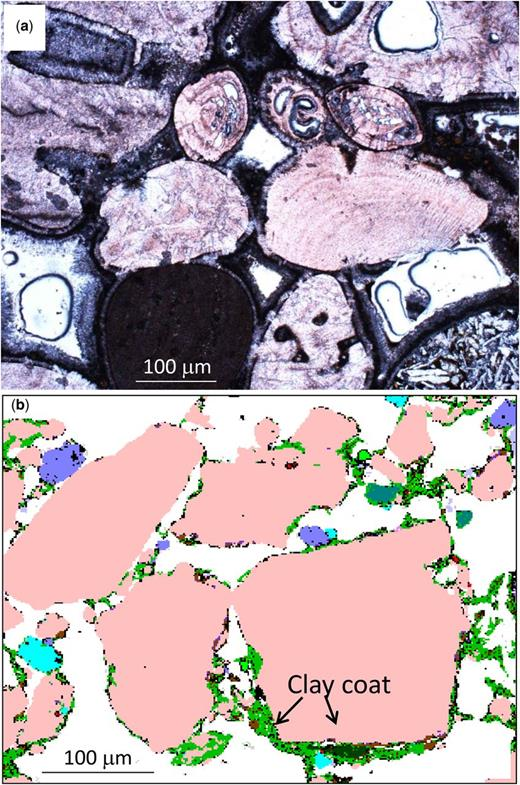 Grain coatings on carbonates and sandstones formed during eodiagenesis: (a) light optical image of a modern carbonate sand, Bahamas, lime mud coating isopachous fringing aragonite cement. (b) QEMSCAN image of a modern sand, Ravenglass Estuary, NW England, UK, with clay minerals (green) coating quartz (pink), plagioclase (turquoise), K-feldspar (dark green) and dolomite (purple) grains. (Image (a) courtesy of Cathy Hollis, image (b) courtesy of Richard Worden, James Utley and Luke Wooldridge.)