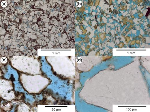 Micrographs from (a) the Heron field sample at 4391 m with mechanical compaction features (e.g. bended mica grain, concavo-convex grain); (b) the Judy field at 3558 m with no mechanical compaction features and high porosity; (c) the Heron field at 4393 m with thick and complete covering chlorite coatings, and (d) the Judy field at 3548 m with thin, partly covering chlorite coatings.