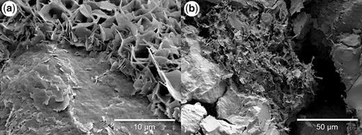 SEM images from (a) the Heron field sample at 4393 m with a clay coating root zone parallel to the detrital grain surface and a second layer of well-defined chlorite crystals oriented perpendicular to the detrital surface, and (b) the Heron field sample at 4417 m with a pore-filling clay mixture of chlorite and illite.